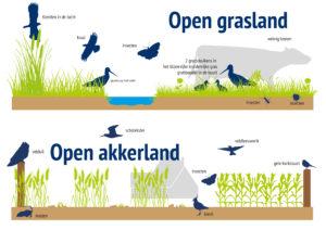 Voorbeeld infographic visualisatie