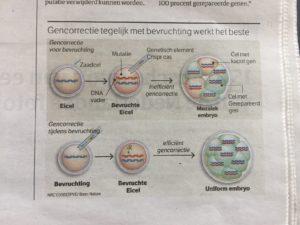 Voorbeeld infographic krant
